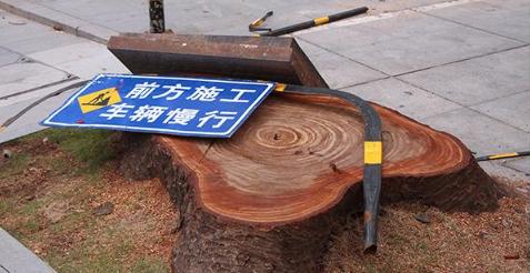 【IN视频】文锦中路树木被砍未补种?罗湖区城管局这样回应