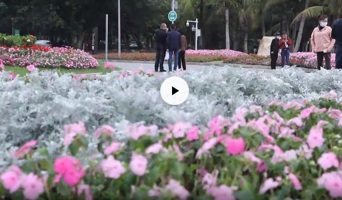 IN视频|今年清明节怎么祭扫?