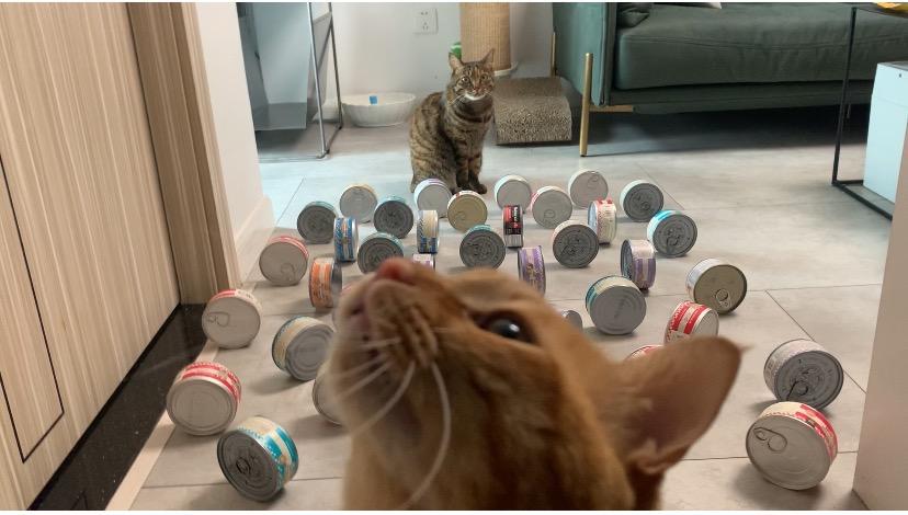 """宠TA丨猫咪们""""翻山越岭""""不是为你,而是为了……"""