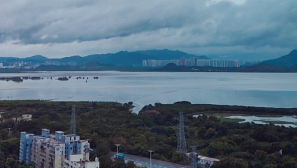 IN视频|今日深圳7月31日:追逐云间的飞鸟