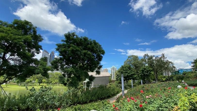 IN视频|今日深圳8月5日:白色礼堂旁,玫瑰满山坡