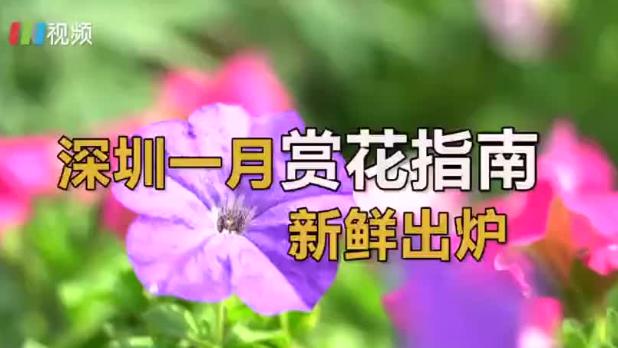深圳一月赏花指南 邂逅新年第一波花事